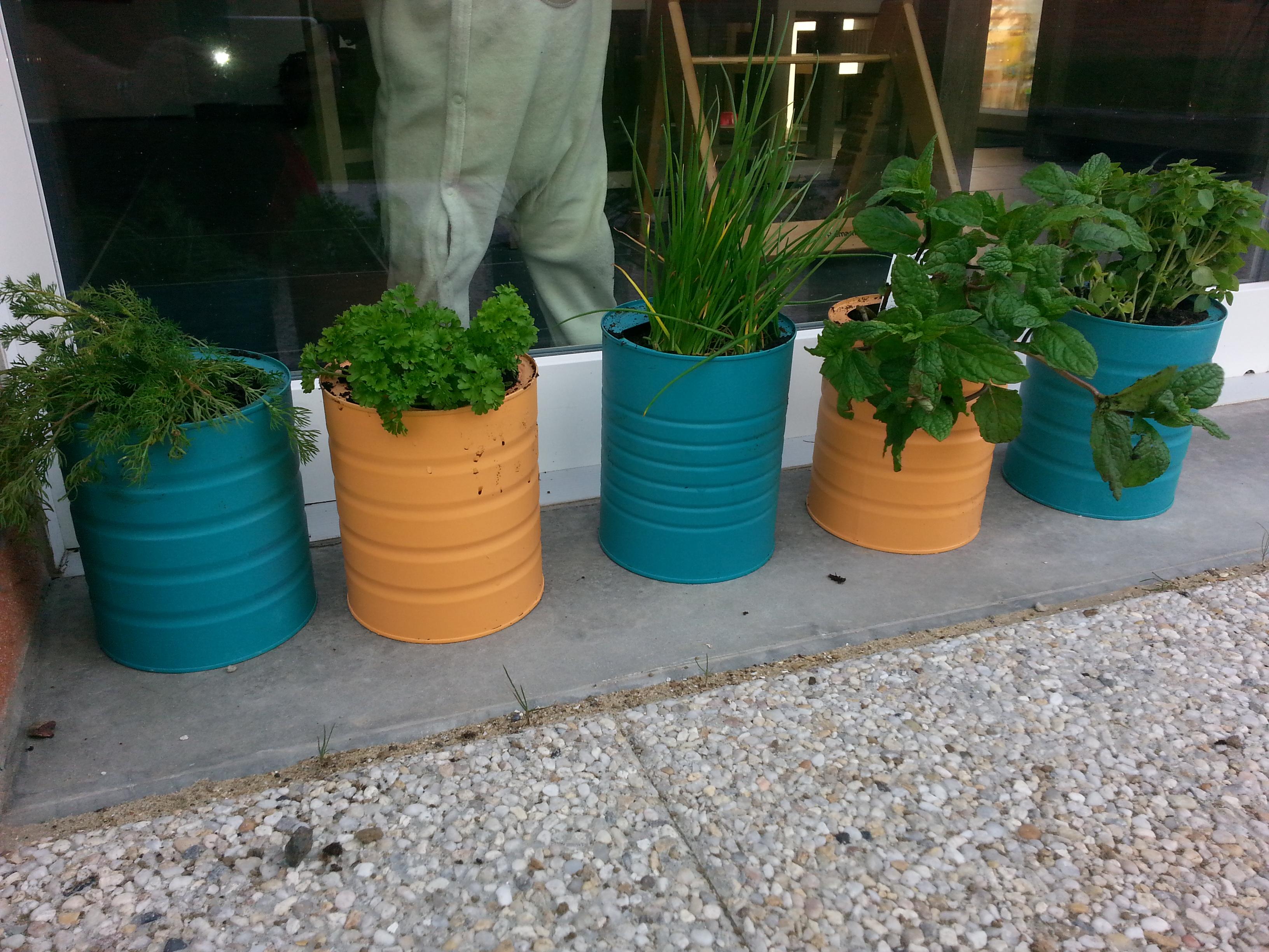 boite-lait-aromate-plante