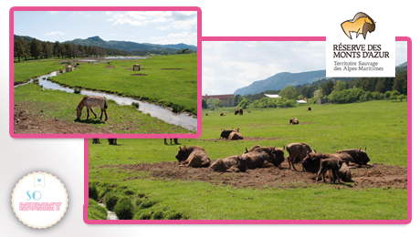 So-mummy-safari-bison-thorenc-reserve-animaliere
